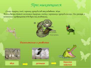 Самки ящериц, змей, черепах, крокодилов откладывают яйца. Из яиц вылупляются