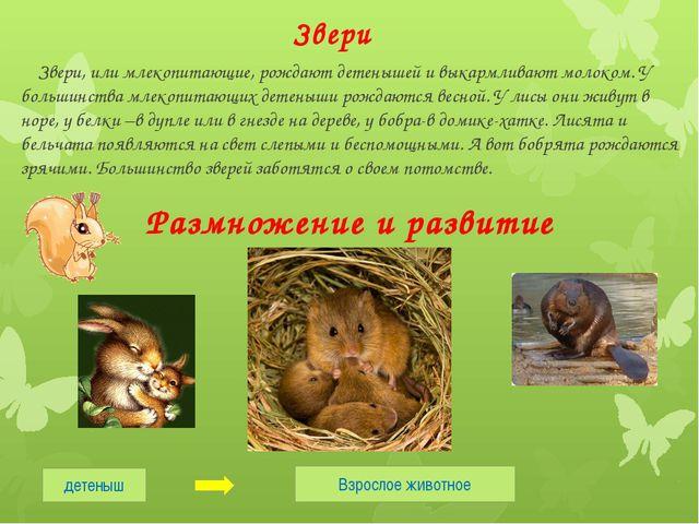 Звери Звери, или млекопитающие, рождают детенышей и выкармливают молоком. У б...