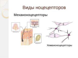 Виды ноцецепторов Механоноцецепторы Хеманоноцецепторы