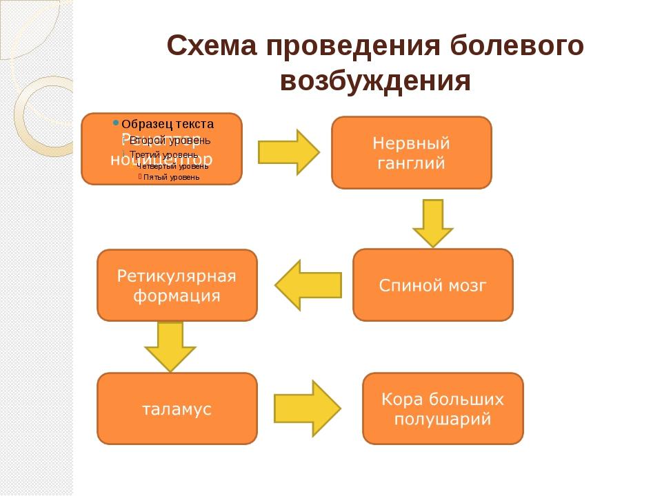 Схема проведения болевого возбуждения