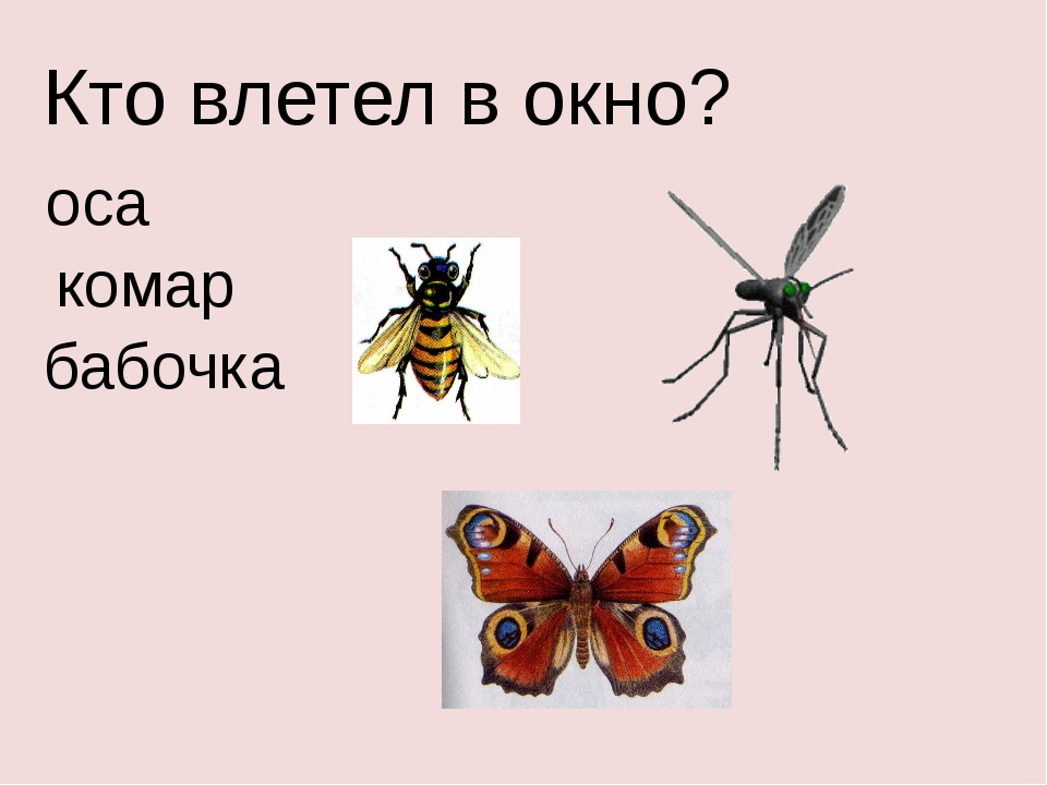 Кто влетел в окно? оса комар бабочка