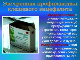 Иммуноглобулин в течение нескольких недель (до месяца) предохраняет от зараже
