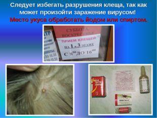 Следует избегать разрушения клеща, так как может произойти заражение вирусом!