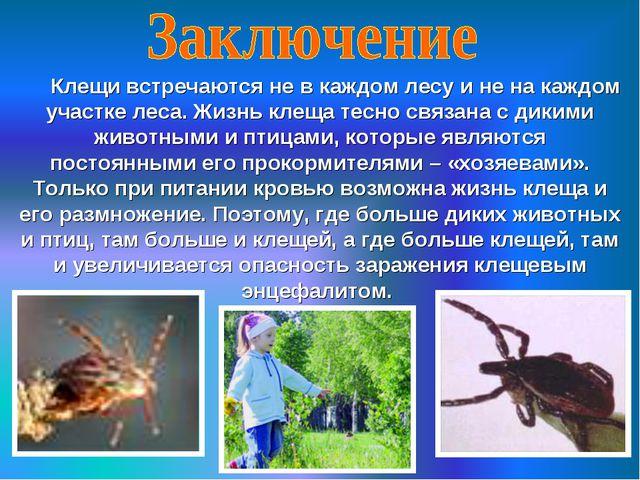 Клещи встречаются не в каждом лесу и не на каждом участке леса. Жизнь клеща...