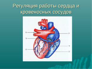 Регуляция работы сердца и кровеносных сосудов