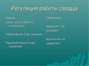 Регуляция работы сердца Нервная (центр- продолговатый и спинной мозг) Симпати