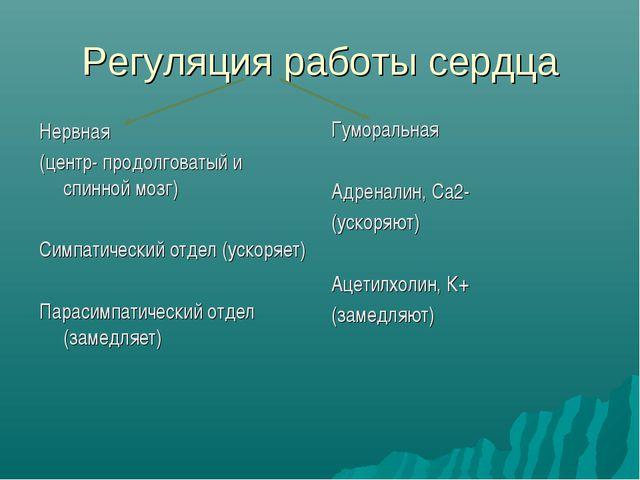 Регуляция работы сердца Нервная (центр- продолговатый и спинной мозг) Симпати...
