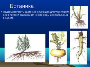 Ботаника Подземная часть растения, служащая для укрепления его в почве и всас