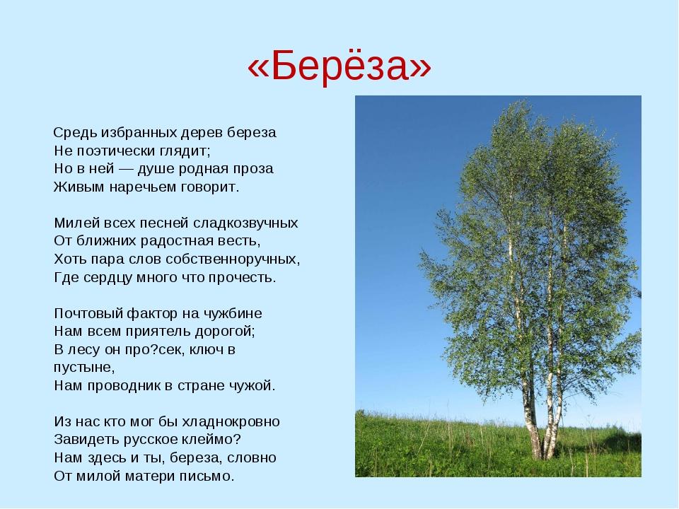 «Берёза» Средь избранных дерев береза Не поэтически глядит; Но в ней — душе р...