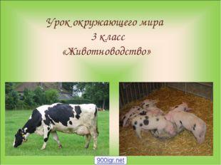 Урок окружающего мира 3 класс «Животноводство» 900igr.net