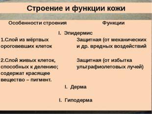 Строение и функции кожи Особенности строения Функции Эпидермис 1.Слой из мёрт