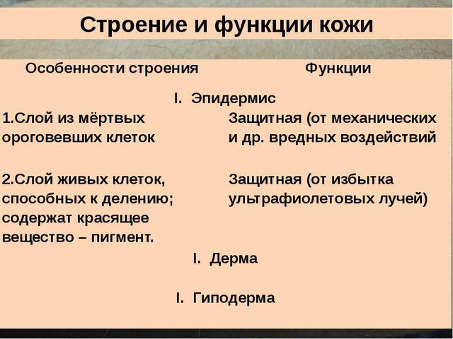 Строение и функции кожи Особенности строения Функции Эпидермис 1.Слой из мёрт...
