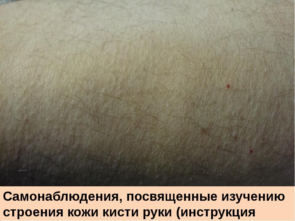 Самонаблюдения, посвященные изучению строения кожи кисти руки (инструкция с.2...
