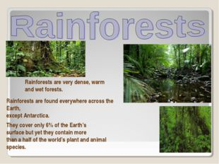 Rainforests are very dense, warm and wet forests. Rainforests are found every