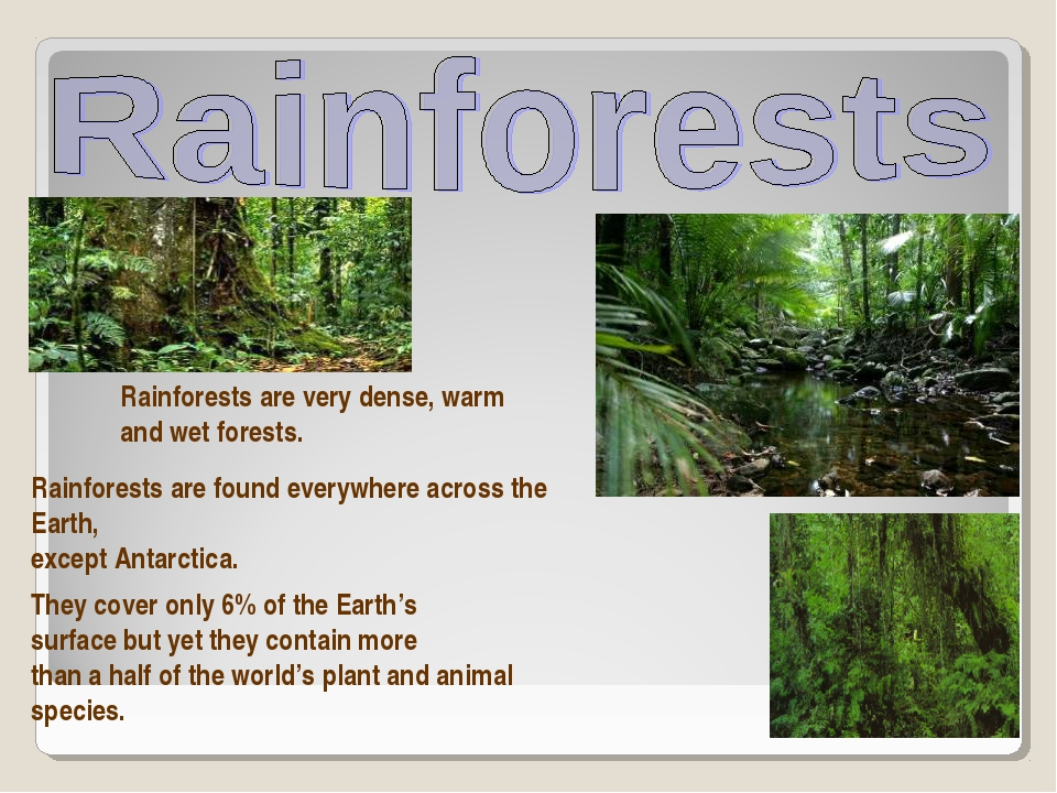 Rainforests are very dense, warm and wet forests. Rainforests are found every...