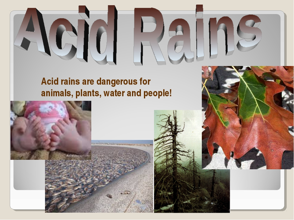 Acid rains are dangerous for animals, plants, water and people!
