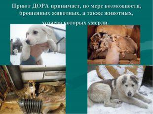 Приют ДОРА принимает, по мере возможности, брошенных животных, а также животн