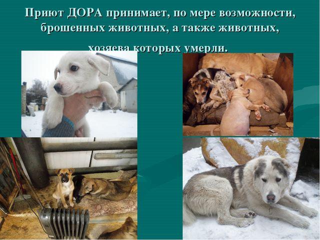 Приют ДОРА принимает, по мере возможности, брошенных животных, а также животн...