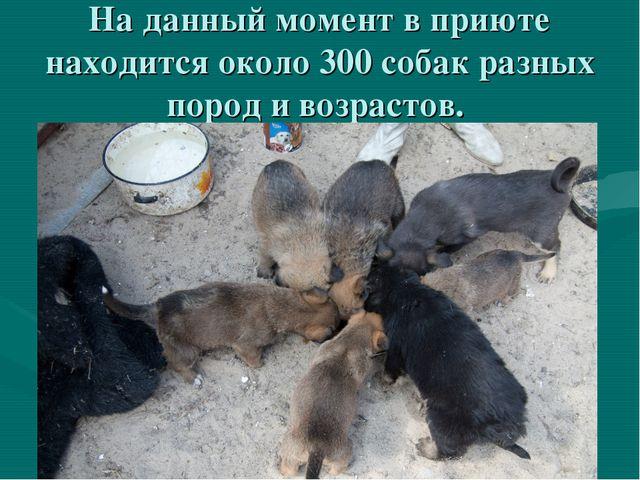 На данный момент в приюте находится около 300 собак разных пород и возрастов.