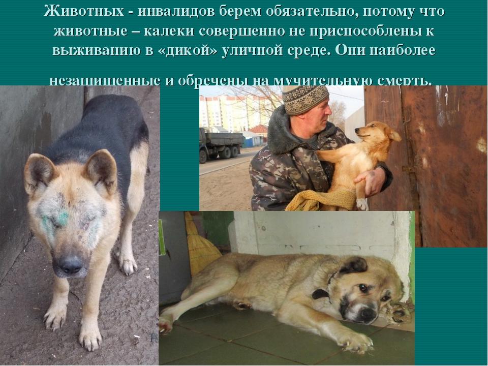 Животных - инвалидов берем обязательно, потому что животные – калеки совершен...