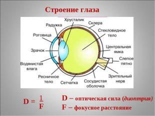 Строение глаза D = − D – оптическая сила (диоптрия) F – фокусное расстояние F 1