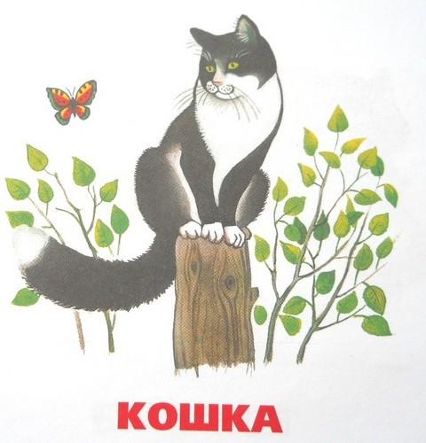 http://sarapulmama.ru/wp-content/uploads/2013/02/domashnie-zhivotnyie-Koshka.jpg