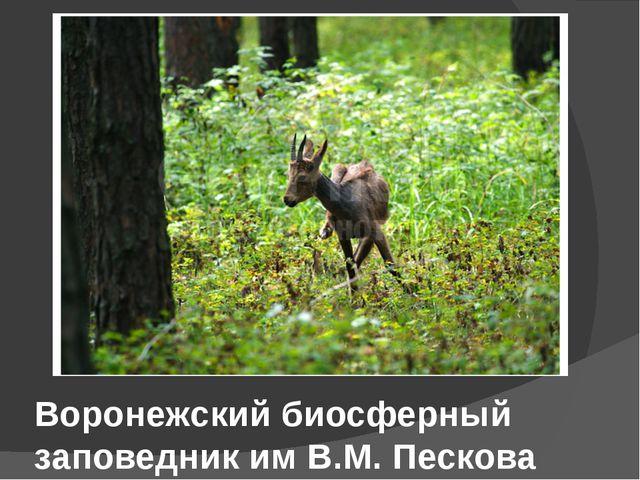 Воронежский биосферный заповедник им В.М. Пескова