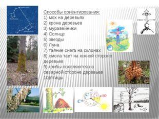 Способы ориентирования: 1) мох на деревьях 2) крона деревьев 3) муравейники 4