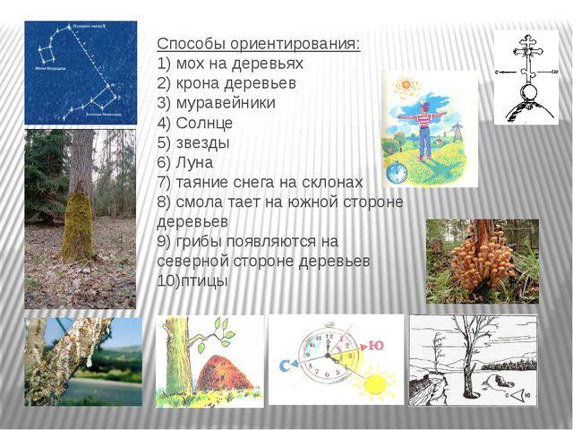 Способы ориентирования: 1) мох на деревьях 2) крона деревьев 3) муравейники 4...