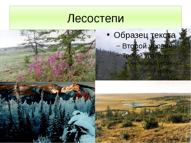 Лесостепи Характеризуя природу Таймыра, нельзя не сказать, что именно здесь,...