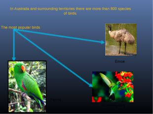 In Australia and surrounding territories there are more than 800 species of b