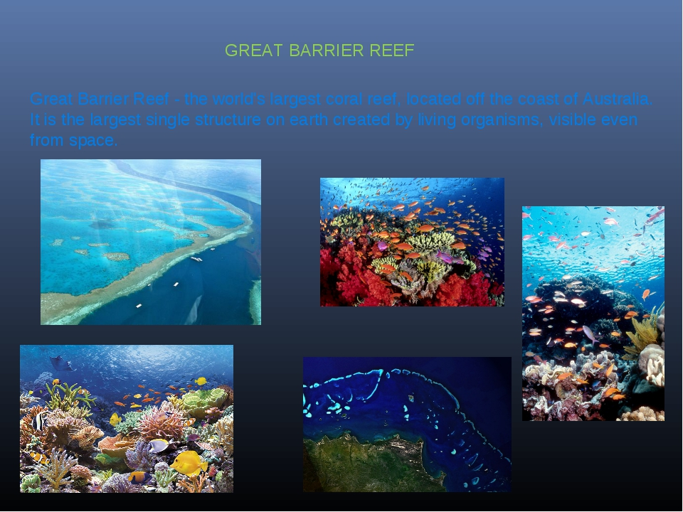 Great Barrier Reef - the world's largest coral reef, located off the coast of...
