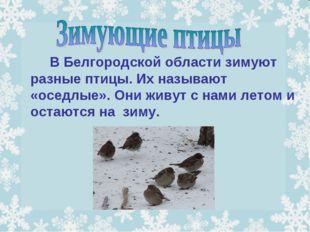 В Белгородской области зимуют разные птицы. Их называют «оседлые». Они жив