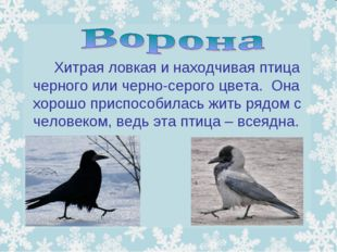 Хитрая ловкая и находчивая птица черного или черно-серого цвета. Она хорошо