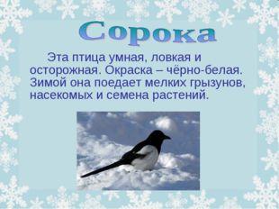 Эта птица умная, ловкая и осторожная. Окраска – чёрно-белая. Зимой она пое