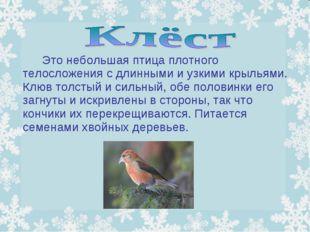 Это небольшая птица плотного телосложения с длинными и узкими крыльями. Кл