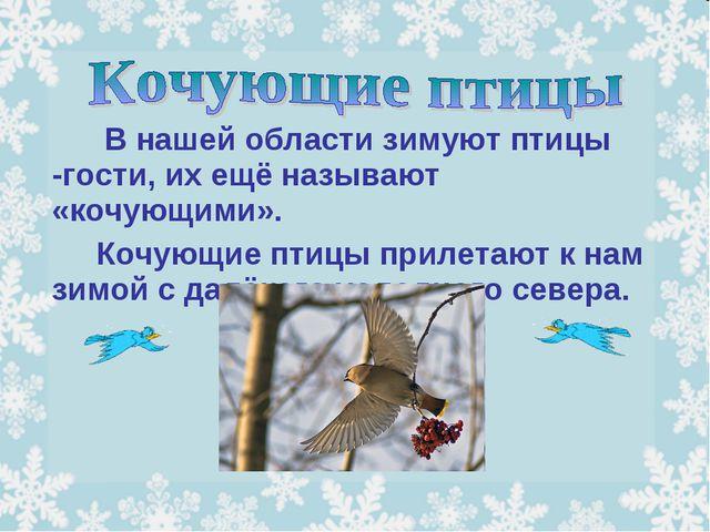 В нашей области зимуют птицы -гости, их ещё называют «кочующими». Кочую...
