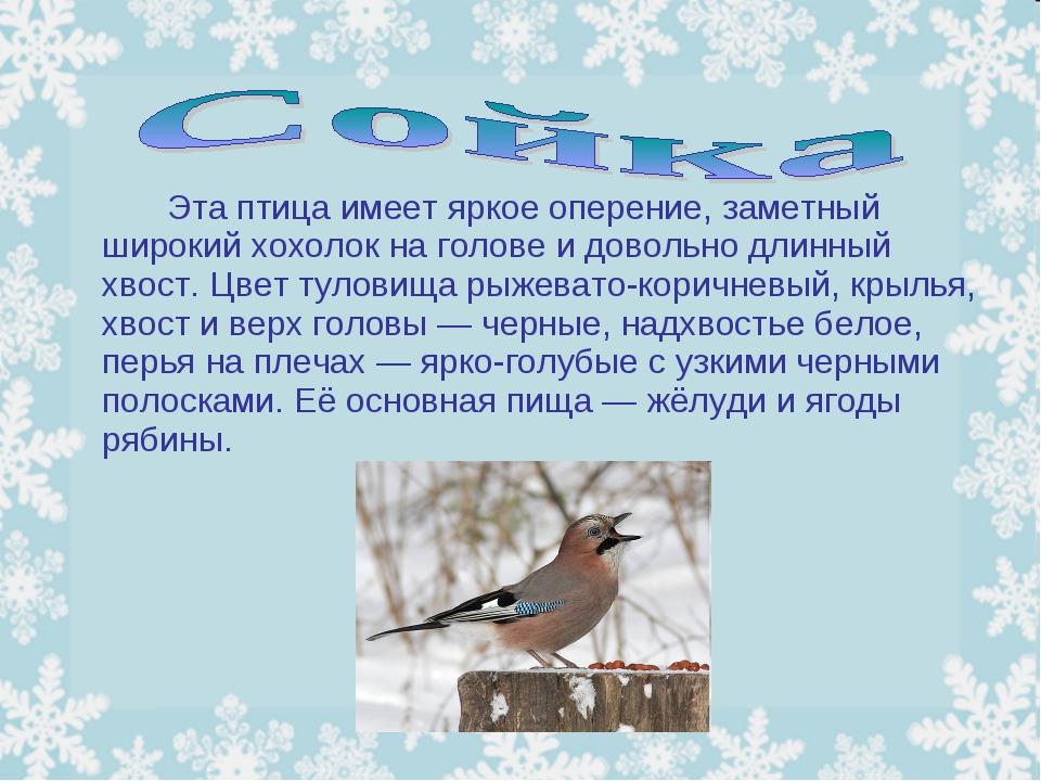 Эта птица имеет яркое оперение, заметный широкий хохолок на голове и довол...