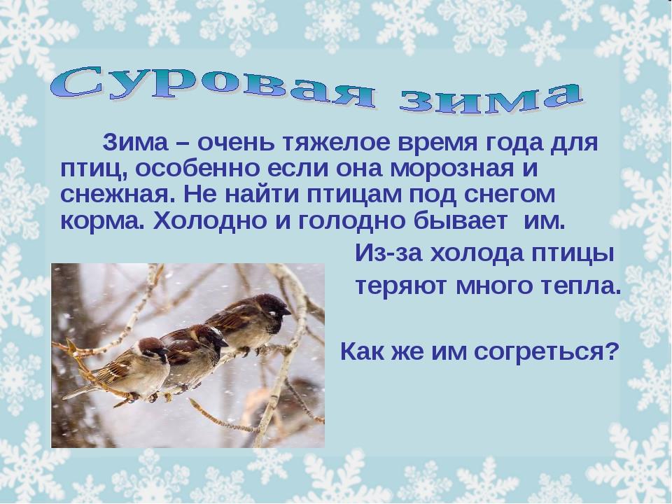 Зима – очень тяжелое время года для птиц, особенно если она морозная и сне...