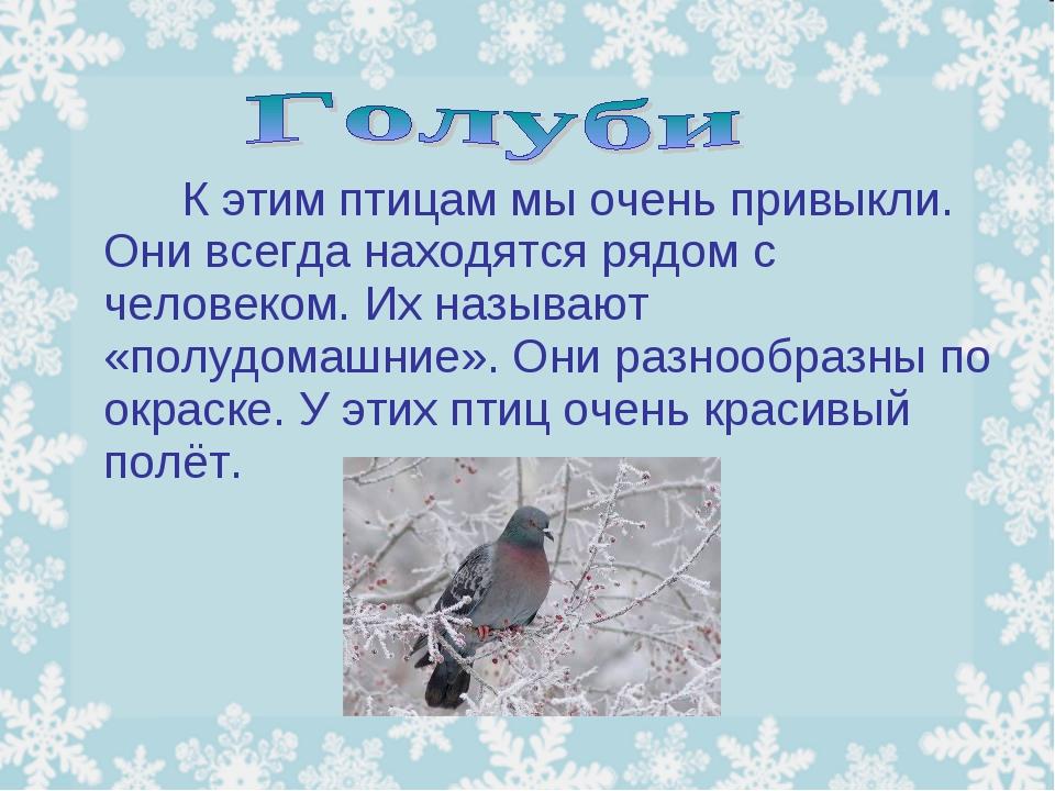К этим птицам мы очень привыкли. Они всегда находятся рядом с человеком....