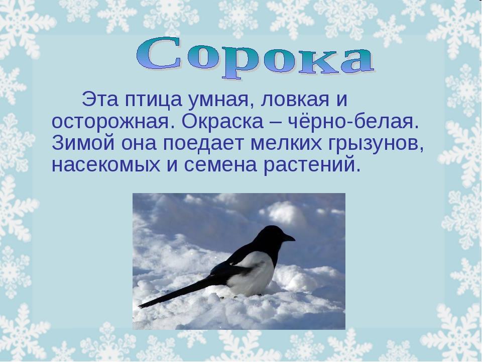 Эта птица умная, ловкая и осторожная. Окраска – чёрно-белая. Зимой она пое...