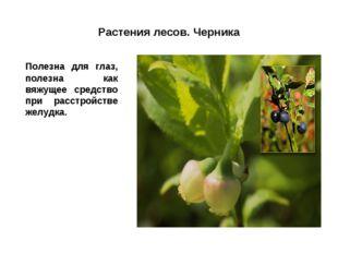 Растения лесов. Черника Полезна для глаз, полезна как вяжущее средство при р