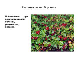 Растения лесов. Брусника Применяется при почечнокаменной болезни, ревматизме