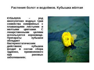 Растения болот и водоёмов. Кубышка жёлтая КУБЫШКА – род многолетних водных т