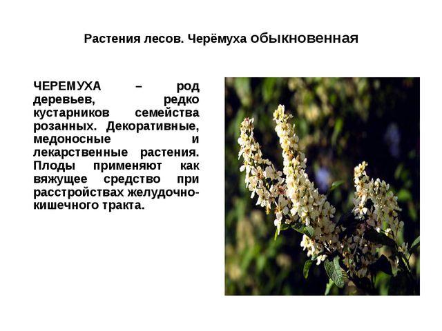 Растения лесов. Черёмуха обыкновенная ЧЕРЕМУХА – род деревьев, редко кустарн...