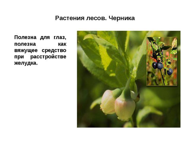 Растения лесов. Черника Полезна для глаз, полезна как вяжущее средство при р...