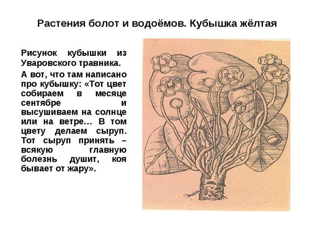 Растения болот и водоёмов. Кубышка жёлтая Рисунок кубышки из Уваровского тра...