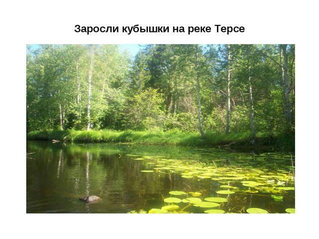 Заросли кубышки на реке Терсе