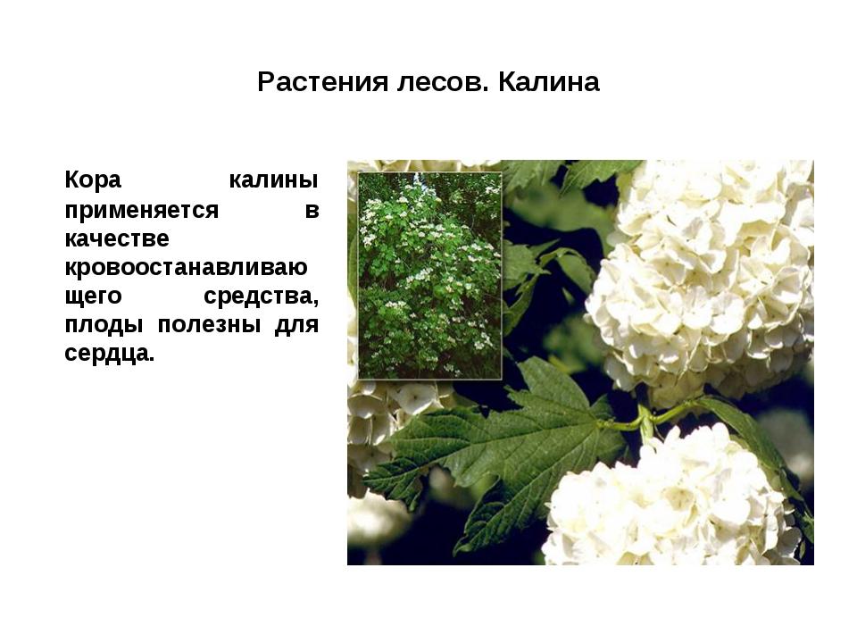 Растения лесов. Калина Кора калины применяется в качестве кровоостанавливающ...