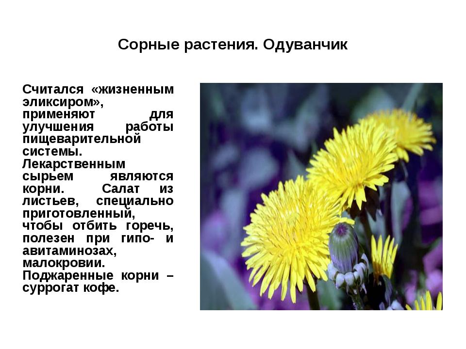 Сорные растения. Одуванчик Считался «жизненным эликсиром», применяют для улу...